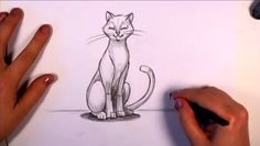 How to Draw a Cat in Pencil - CC