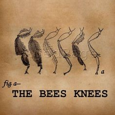 The bees knees.