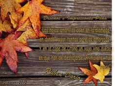 Bienvenida Otoño 2015 Welcome Autumn