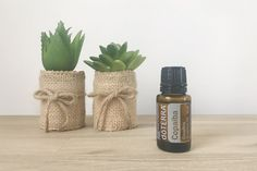 Why everyone is talking about Copaiba essential oil