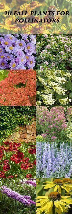 Pollinators LOVE these nectar-rich plants - Gardening Take Outdoor Plants, Garden Plants, Outdoor Gardens, Vegetable Garden, Winter Plants, My Secret Garden, Secret Gardens, Fall Flowers, Summer Flowers