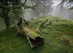 World Building account of Brighemclept. Feel free to stick around if you like fantasy, nature and old world vibes. Mother Earth, Mother Nature, Outlander, Baba Yaga, Breath Of The Wild, Plein Air, Dragon Age, Bushcraft, Beautiful Places
