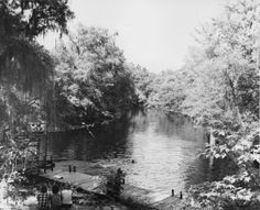 Oleno State Park. Swimming is fun in the cool waters of the spring-fed Santa Fe River at Oleno State Park near High Springs, Florida.