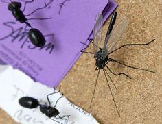 Juego de 4 piezas de diferentes insectos.  Incluye 2 hormigas y 2 mosquitos