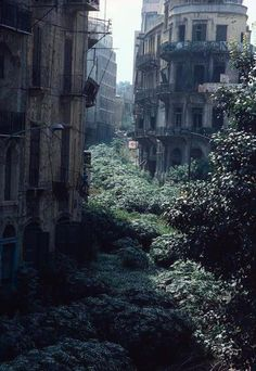 The Green Line demarcation zone, Lebanon by A.Abbas, 1982, during the Lebanese Civil War from 1975 to 1990