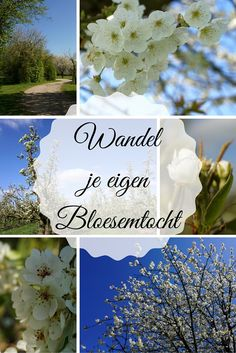 Missed the blossom tour? I walked the blossom tour around Buren. Netherlands Country, Fruit Garden, Best Hikes, Staycation, Hiking Trails, Day Trips, Planting Flowers, Going Out, Places To Go