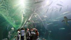 Aquarium of the Bay in San Francisco