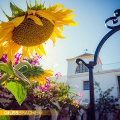 Wedding venue in Seville, Spain. When the sunflowers are out, it really is a magical place. A venue your wedding guests will remember for years to come.