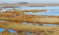 Image result for McInnis Marsh