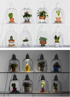 Functional and Fashionable Lamp Doubles as a Planter