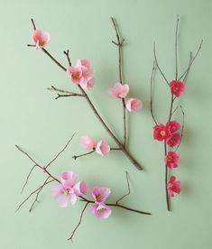 Cherry Blossom Branch Cherry Blossom Branch Floral designer Livia Cetti author of The Exquisite Book of Paper Flowers shares how to make a charming branch of paper cherry blossoms. The post Cherry Blossom Branch appeared first on Paper Ideas. Crepe Paper Flowers, Fabric Flowers, Tissue Flowers, Balloon Flowers, Flower Crafts, Diy Flowers, Bright Flowers, Fake Flowers, Craft Ideas