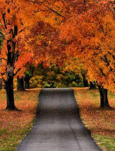 Middleburg, VA: Photo by ArtByChrysti, via Flickr
