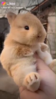 Cute Bunny Pictures, Baby Animals Pictures, Cute Animal Photos, Cute Animal Videos, Baby Animals Super Cute, Cute Baby Bunnies, Cute Little Animals, Pet Bunny Rabbits, Pet Rabbit