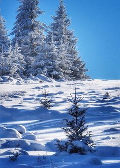 Rosamaria G Frangini Snow Pictures, Scenery Pictures, Nature Pictures, Winter Magic, Winter Snow, Winter Time, Winter Photography, Nature Photography, Winter Scenery