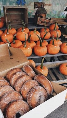 Fresh pumpkins at the pumpkin patch and cinnamon sugar donuts. Fall inspiration and photo ideas. Things to do during fall. Dessert bar inspiration ideas for brunch, birthday party, Halloween party. Fotografia Vsco, Autumn Cozy, Autumn Feeling, Fall Winter, Autumn Aesthetic, Book Aesthetic, Fall Wallpaper, Fall Pictures, Halloween Pictures