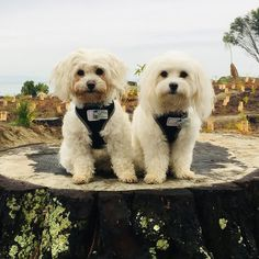 TagsForHope creates the cutest pet ID tags that keep your pets safe. Animals And Pets, Cute Animals, Reactive Dog, Dog Id Tags, Pet Safe, Pet Id, Dogs And Puppies, Doggies, Dog Breeds