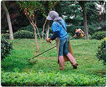 Jardinagem e Paisagismo - Treinamento de Jardineiro