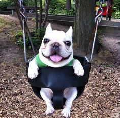 Lets take Max to the park