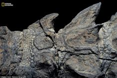 New Dinosaur Fossil So Well-Preserved it Looks Like a Statue | Geology IN