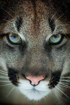 Puma Beauty