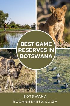 Planning your Botswana holidays? Find out about some of the best Botswana game reserves for a wildlife safari and why they are top Botswana tourist attractions. Think Okavango Delta and Moremi Game Reserve, Chobe National Park (including Savuti and Linyanti), Central Kalahari Game Reserve, Makgadikgadi National Park, Makgadikgadi Salt Pans, Nxai National Park and Kgalagadi Transfrontier Park Botswana. #ChobeBotswana