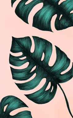 New Wallpaper Pastel Iphone Art Prints Ideas Tumblr Wallpaper, Wallpaper Backgrounds, Wallpaper Lockscreen, Trendy Wallpaper, Aesthetic Iphone Wallpaper, Aesthetic Wallpapers, Floral Wallpaper Iphone, Plant Wallpaper, Palm Leaf Wallpaper
