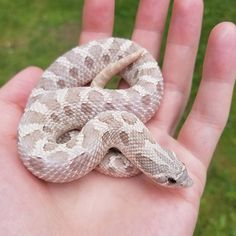 🔥Click the image to see more. Cute Reptiles, Reptiles And Amphibians, Mammals, Kids Camping Bed, Dream Snake, Cute Snake, Beautiful Snakes, Cute Animal Pictures, Cute Funny Animals