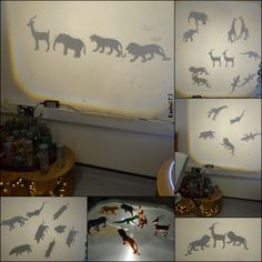 "Investigating animal shadows on the OHP - from Rachel ("",)"
