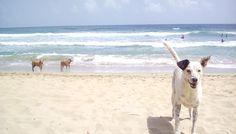 Beach Dog Time Photos - Summer Love Life Laughs  https://www.amazon.com/gp/photos/list?sid=18e6c9563b9bf4e2eb1faca93c113cd840da3e46-f6cda630-796a-44de-ada8-940a93bb9c1e&did=e0dcf9a9303f74ce843373e20aebe10c6334a253