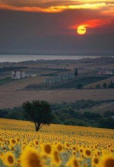 les champs d'italie avec tournesols, séjour en toscane