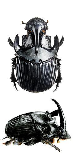 sulcophanaeus faunus