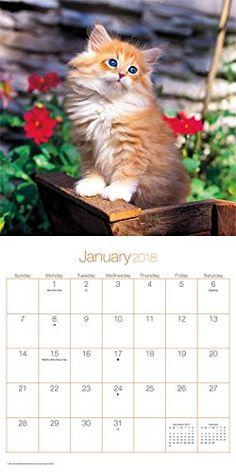 Buy your 2018 Cuddly Kittens mini calendar from Purrfect Gifts Online today! Cat Calendar, Kitten Love, Kittens, Cats, Online Gifts, Mini, Animals, Cute Kittens, Gatos