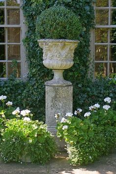 OLD HALL GARDENS Urn - Wollerton Old Hall Gardens…Repeat, so sorry…….hard to beat a great pot and a great boxwood!Urn - Wollerton Old Hall Gardens…Repeat, so sorry…….hard to beat a great pot and a great boxwood! Formal Gardens, Outdoor Gardens, Courtyard Gardens, Indoor Garden, Garden Urns, Boxwood Garden, Garden Paths, Cacti Garden, Garden Table