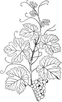 Natural Branch Vine