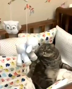 Animal Humour, Funny Animal Memes, Funny Animal Videos, Funny Animal Pictures, Cat Memes, Cute Baby Cats, Cute Little Animals, Cute Funny Animals, Funny Cute