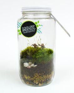 Ewoks Moss Terrarium // MOSS WARS
