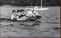 Snowman, champion show jumper, enjoys a swim with his family.