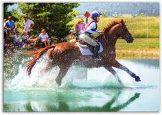 too bad my horse is scared of water this looks awsome