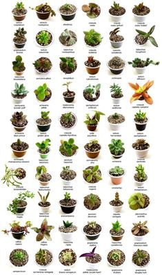 25 Types of Succulents & How to Grow It for Beginners Arten von Sukkulenten #saf