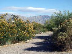 Desert Haven RV Park & Workamping Program NM
