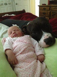 #cute #baby #pittbull <3