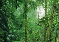 NATURAL: Amazon Rainforest is immence, larger than Europe. The 6280 kilometer long Amazon River is fed by a thousand rivers some over 1600 kilometers long