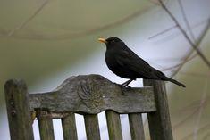 Welcher Vogel ist das? Vogelstimmen erkennen!   Duda.news Bird, Animals, House Martin, Chaffinch, Robin, Kinds Of Birds, Animales, Animaux, Birds