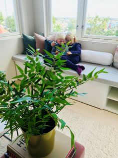 prosjekt perfekt Interior, Plants, Indoor, Interiors, Plant, Planets