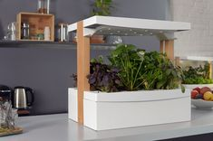 Fresh Square: grow your veggies & herbs indoor in the most natural way.
