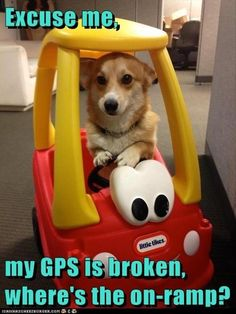 Dump A Day Funny Animal Pictures Of The Day - 34 Pics
