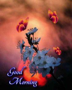 Good Morning Photos, Good Morning Happy, Good Morning Flowers, Beautiful Morning, Good Morning Greeting Cards, Morning Greetings Quotes, Morning Quotes, Blue Roses Wallpaper, Tattoo Lettering Fonts