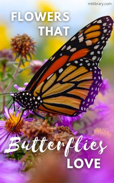 If your goal is to create a magical butterfly sanctuary in your own backyard, look no further! These must-have flowering plants are sure to attract a variety of butterflies to your yard, in addition to other native pollinators such as hummingbirds and bees. #butterflies #flowers Urban Gardening, Flower Gardening, Planting Flowers, Easy Garden, Garden Tips, Garden Ideas, Tall Plants, Flowering Plants, Plants That Attract Butterflies