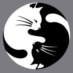 el ying yang gatuno no todos los gatos negros dan mala suerte sobre todo si tienen un compañero gato blanco....