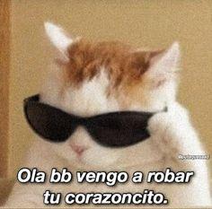 Memes Amor, Memes Estúpidos, Stupid Memes, Funny Memes, Stupid Funny, Cute Cat Memes, Cute Love Memes, Memes Lindos, Romantic Memes